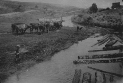 Bullock Team at Kaiwaka River.; 18-253