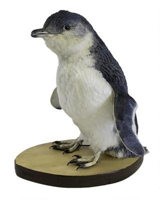 Bird - Little Blue Penguin x 2; 18-90