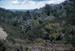Kauri Grove on Bream Tail Farm.; 18-126