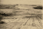 Tung Oil Plantation; 17-16A