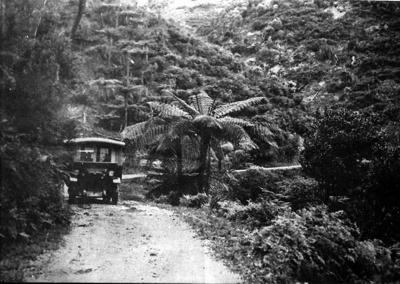 Waipu Gorge.; 16-43