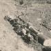 Bert Williams bullock team hauling logs; 19-144