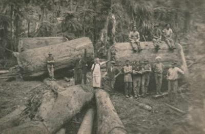 Logging; 19-149