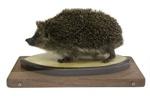Hedgehog ; 17-97