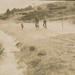 Tung Oil Plantation; 17-16 D