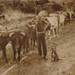 HB Browne with bullocks; 19-147