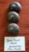Kauri Snail Shells; 430
