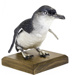 Bird - Little Blue Penguin.  RETURNED TO DONOR (TE PAPA) 26/2/2020; 831