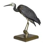 Bird - White Faced Heron; 827