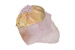 Toddlers Helmet / Bonnet; 503