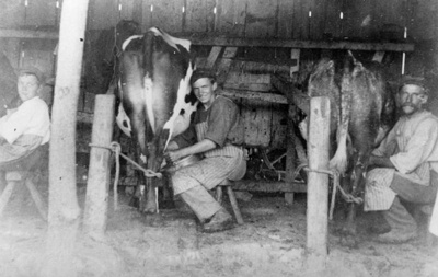 Photograph of Men in Milking Shed, 35