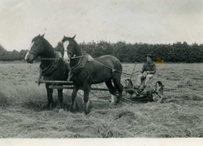 Photo of mowing the hay with horse-drawn mower