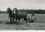 Photograph of Mowing of Hay, c1930, 31