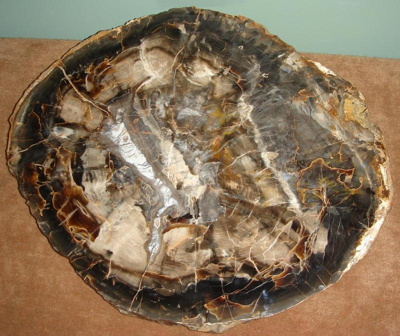 Petrified Wood, 4.95.373