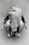 The Headless Chicken, Peebles, Don, 1999, 354
