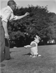 Dog obedience; Unidentified; 1930s; 13-2198