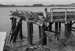 Photograph of wharf, Dargaville; Les Downey; 1973; 14-3906