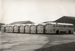 Auckland buses; 1950s; 08/092/090
