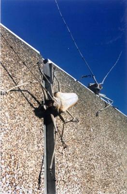 Batocera longhorns & Goliath ; Elizabeth Thomson; 1996; 96/5