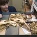 Aptornis otidiformis Owen, 1844.  North Island Adzebill, complete skeleton, AU6964.A