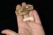 Fossil Penguin, flipper bone (metacarpus), AU-V3a