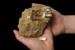 Fossil Penguin, leg bone (tarsometatarsus), AU-V5c