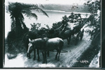 Horse coach with tourists, 23/02/1914, GP-100