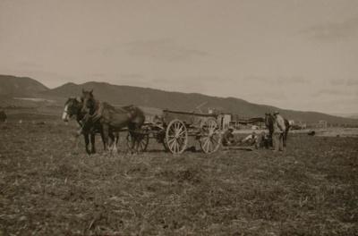 Brent's farm, Payton, Edward W., OP-1608