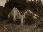 Ruins of Sophia's whare, Te Wairoa, Payton, Edward W., Circa 1900, OP-1917