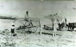 Haymaking at Peat's Farm, 1920, CP-2430