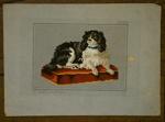 Pattern; Elizabeth Laird (1814-1892); Circa 1850-1870; XFH.470