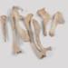 Bones, Moa; Dinornithiformes; bird; WY.1994.43.1