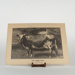 Photograph, Prize Ayrshire Cow.; Mora Studio; 1890-1900; WY.0000.1105