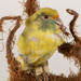 Kākāriki, Mounted in Glass Dome; Aves, Psittaciformes, Psittaculidae, Cyanoramphus, C. malherbi; bird; Taieri Plains, Otago, New Zealand; WY.1996.73