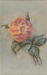 Pastel Drawing, Rose [In Copyright]; Marshall, Jean; 1974-1988; WY.1997.41.1
