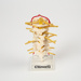 Anatomical Model, Spine; Charles E Frosst; 1950-2000; WY.2003.11.105
