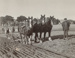 Photograph, A Team of Horses Ploughing; Cameron, W; 1890-1900; WY.1989.417.3
