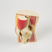 Anatomical Model, Knee; Unknown manufacturer; 1950-2000; WY.2003.11.103