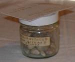 Regurgitated Moa Gizzard Stones; A MOA; 1979-0639-1