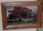 Framed Photo - Pahiatua Town Square; 1998-2433-1