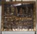 Brass Fireguard; 1979-0866-1
