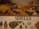 Shells, 1321