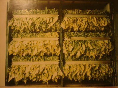 Kiln dried tobacco, Unknown, 2811