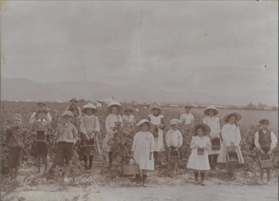 Raspberry pickers at Archie Kennard's patch in 190...