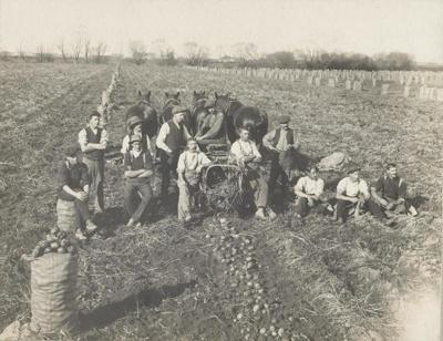 Potato harvesting, Clarke, W.J   Oamaru New Zealand, unknown, 009-2002-1026-01688