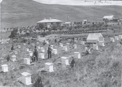 Tom Beaven and Bill Harrison check the hives beehi...
