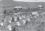 Beehives at Hamilton residence, Ikawai  ; Unknown; 1910; 2002-1026-05233