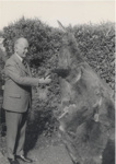Governor General, Sir Charles Willoughby Norrie, shakes hands with the giant Waimate Wallaby, Unknown, 1954, 015-2002-1026-06037