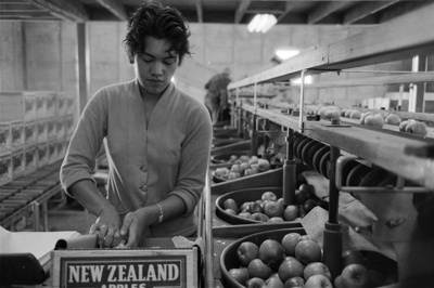 Girl packing apples in a Nelson orchard