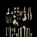 Scarlett's Shearwater, Puffinus spelaeus, holotype, Te Ana Titi Cave, Fox River, S.028002
